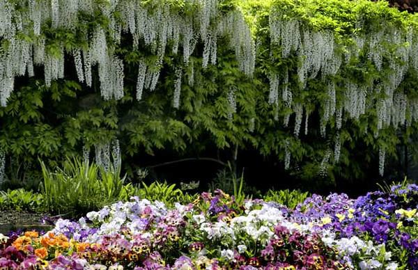 flowers gardens biltmore house