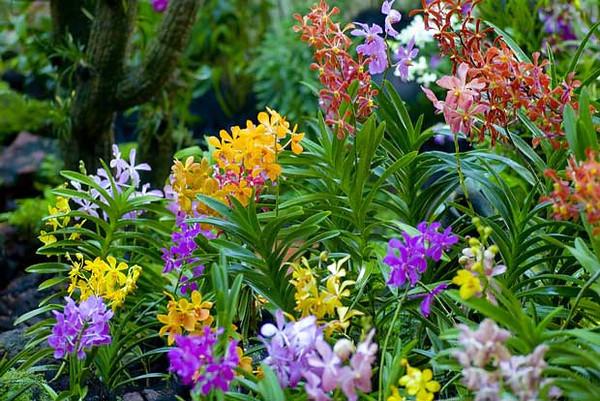 famous singapore gardens